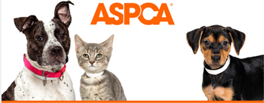 The American Society for Prevention of Cruetly to Animals